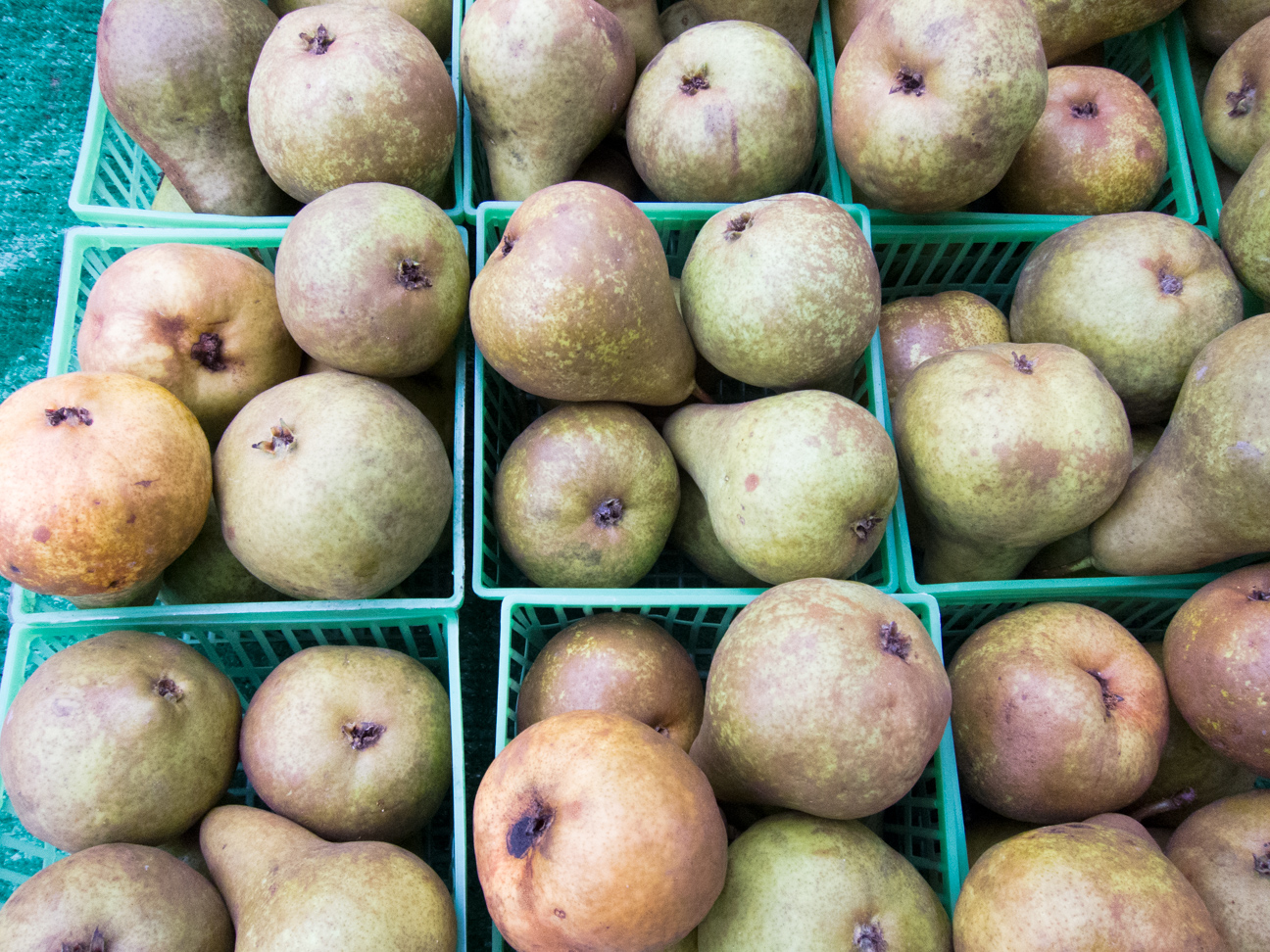 bosc pears at Ottawa Farmer's Markets